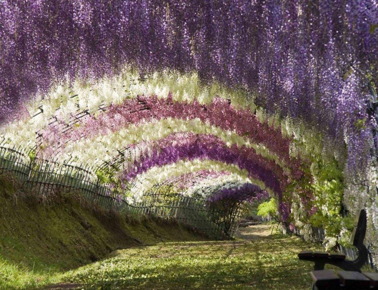 Wisteria_Tunnel