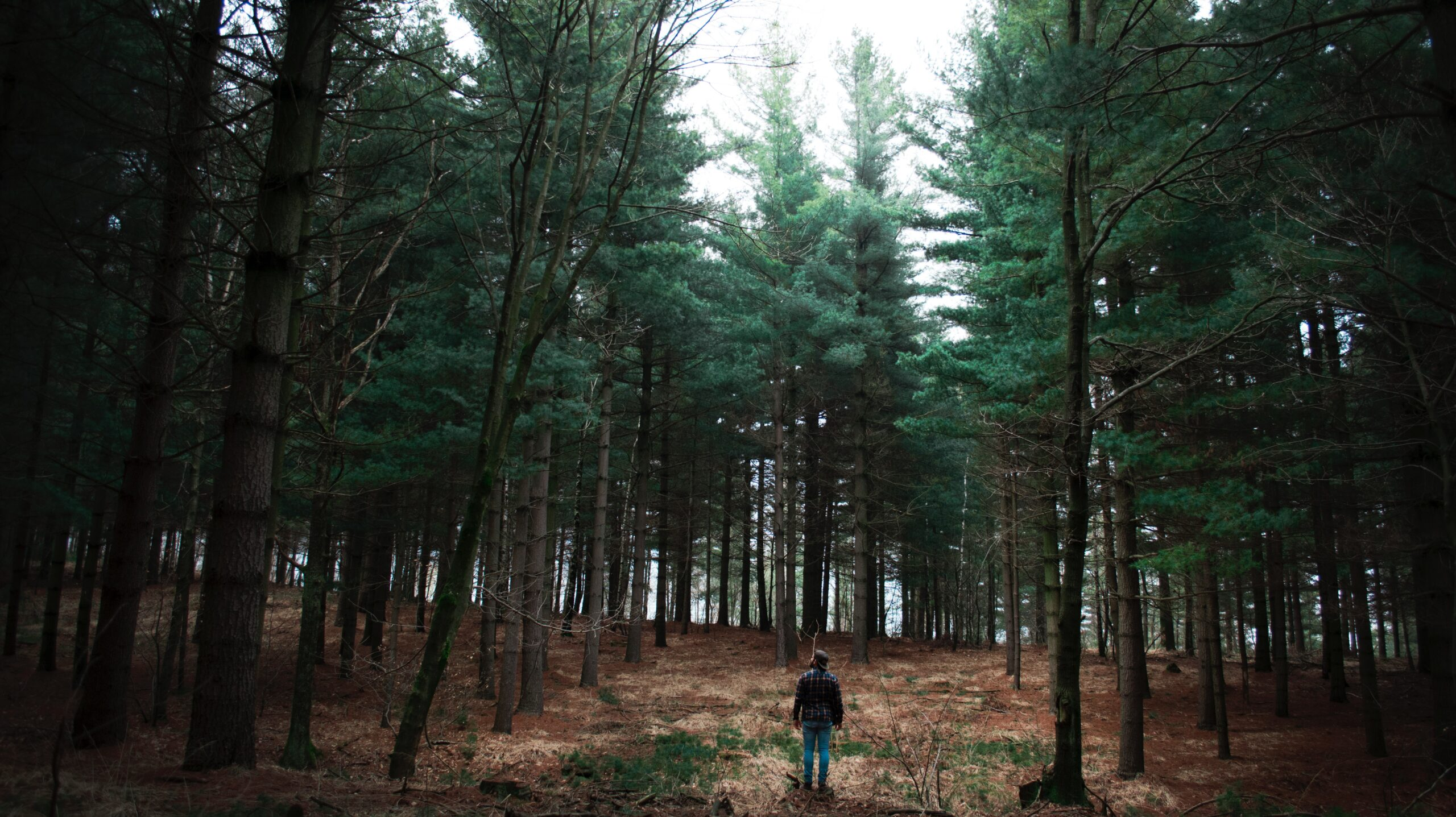 man standing surrounded with tall pine trees